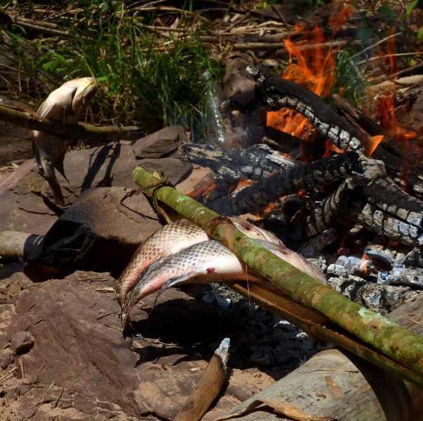 Fish barbecued on an open fire